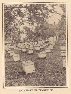 The Honeybee, Serial Number 184 Bumble Bee Honey, Honey Bees, Bee Skep, Bee Hives, Beehive Image, Bee Removal, Buzzy Bee, I Love Bees, Vintage Bee