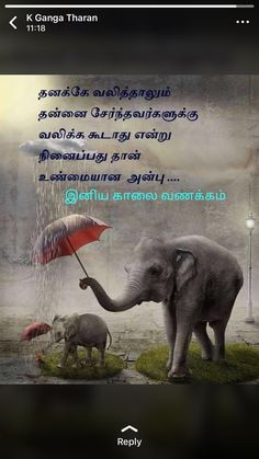 Good Thoughts In English, Beautiful Gif, Elephant, Language, Feelings, Words, Instagram, Quotes, Humility