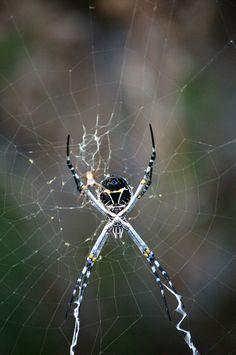 Bugs - Sean McCracken