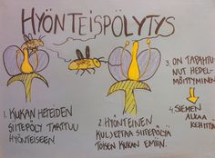 Hyönteispölytys. Science Art, Science And Nature, Geo, Bugs, Natural, History, Bicycle Crunches, Beetle, Insects