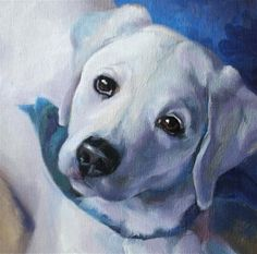 """Lance white lab 8x8 oil on canvas board"" by Bob Pauly"