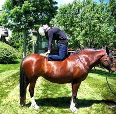 Trend report: Yoga on horseback | We call this a Hamel #yogafunnies