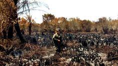 Honduras: Ni 325,000 litros de agua apagan fuego en el Jeannette Kawas  Incendio ya consumió 100 hectáreas del parque. El siniestro cumple hoy cinco días activo en la zona núcleo. Un militar en medio del daño, el hábitat de muchas especies fue destruido. Fotos: Yoseph Amaya