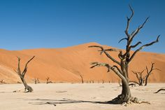 Eazywallz  - Dead acacia trees in desert Wall Mural, $126.34 (http://www.eazywallz.com/dead-acacia-trees-in-desert-wall-mural/)