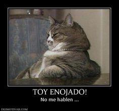 Demasiado FAN!! Toy Enojado Cat