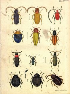 18x24 Vintage Science Plate Poster Insects by curiousprints. , via Etsy.