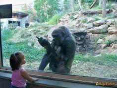 Gorilla Flips off Kid