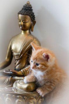 Purrfect Buddha  (by Edward Dalmulder on Flickr)