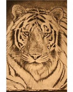 Tiger - Painting Art by SusieGordon