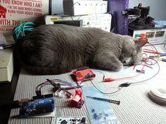 From Adafruit's ongoing Cats of Engineering series.