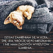 Cute Cats And Dogs, Animals And Pets, Powerful Quotes About Life, Weekend Humor, Funny Memes, Jokes, Happy Campers, Motto, Good Morning