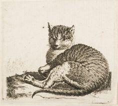Cornelis Saftleven (Alemania, c. 1607-1681). Cat Lying Down with Head Raised.