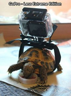 Go Pro. Less Extreme Edition.
