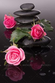 Spa stone and rose flowers still life. Healthcare concept. ...  Dayspa, alternative, asia, asian, background, balance, basalt, bath, beautiful, beauty, black, calm, care, concept, culture, drop, east, flower, healing, health, healthcare, healthy, life, lifestyle, massage, medical, medicine, nature, oriental, peace, pebble, petal, pink, relax, relaxation, rock, rose, spa, stack, still, stone, symbol, therapy, tranquil, treatment, water, wellbeing, wellness, zen