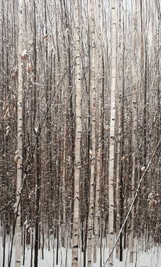 Winter Birch 36×60 Oil on Canvas, 2010  « Peter Rotter