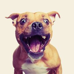 is all about the treats! Show us your treat face! Horses And Dogs, Dogs And Puppies, Dog Love, Puppy Love, Natural Supplements, Dog Treats, Spring Time, Best Dogs, Cool Girl