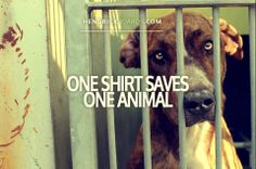 Today, we have partnered with more than 350 local shelters, rescues and sanctuaries across the nation. With each and every purchase made, Hendrick Boards donates to save an animal in need.   A simple tee CAN save a Life!!