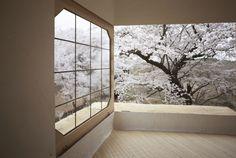 (1) Cathy Hao - Cathy Hao 分享了 Garden Design by Carolyn Mullet 的相簿:Tree...