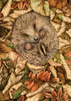 I have a picture book called Hans My Hedgehog, so this one really gets me.