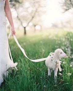 taking my lamb for a walk