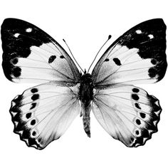 A white butterfly isolated on a white background. - Free Stock Photo Id: 10361 KB) Butterfly Illustration, Butterfly Drawing, Borboleta Tattoo, Bull Tattoos, Stippling Art, Dragonfly Art, Bugs And Insects, White Butterfly, Meaningful Tattoos
