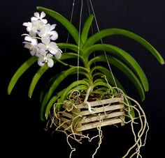 Orchid Identification ~ repotme.com Orchid supplies & advice