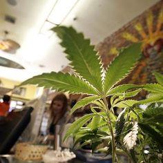 Marijuana legalization wins majority support nationwide via La Times