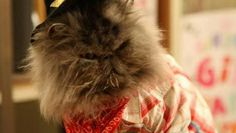 Angus Posted by www.themayhew.org Crazy Cat Lady, Crazy Cats, Angus Thongs And Perfect Snogging, A Cinderella Story, Small Cat, Fluffy Cat, Latest Movies, Movies Showing, Great Movies