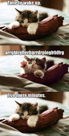 Kitten, you and me both.