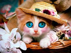 Chats blancs Yeux and Chats on Pinterest