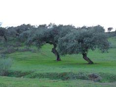 Jerez de los Caballeros (Extremadura) Spain - Dehesa de Extremadura - Meadow