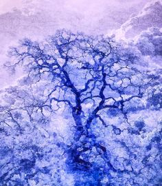 Purple Oak Tree Dream Fine Art Prints For Sale By Priya Ghose