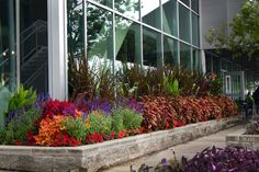 Navy Pier l Chicago Streetscaping Flower Beds, Container Gardening, Landscape, Floral, Flowers, Plants, Beautiful, Chicago, Commercial