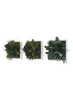 Op zoek naar styleGREEN Wanddecoratie van mos en planten 3 stuks ? Ma t/m za voor 22.00 uur besteld, morgen in huis door PostNL.Gratis retourneren.
