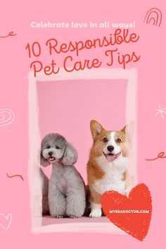 Emotional Support Animal, Pet Care Tips, Your Dog, Teddy Bear, Pets, Animals, Animales, Animaux, Teddy Bears