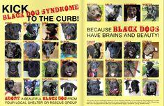 Don't ignore the black dogs! Black Dog Syndrome, Hunter Dog, Black Dogs, Hooch, Maze, Cherokee, Shelter, Adoption, Kicks