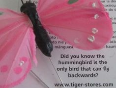 LoVe BUTTERFLIES. Home&ENJOY Decorate. MeSMILE.  Ideas. News.
