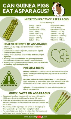 Guinea Pig Food List, Pet Guinea Pigs, Guinea Pig Care, Pet Pigs, Pig Facts, Food Facts, Healthy Bodies, Healthy Pets, Animales
