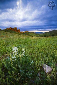 ~~Devil's Backbone ~ springtime wildflowers,  Loveland, Colorado by Erik Page Photography~~