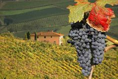 Tuscany Day Trip from Florence with Chianti, Siena & San Gimignano