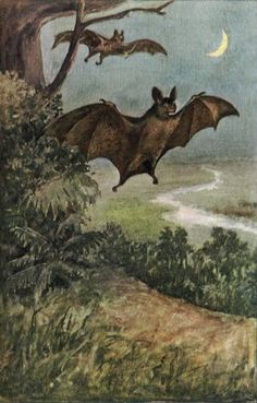 bats under a crescent moon  from the1902 reference book, A Book of Natural History