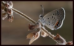 Among the dry branches. by seref calisir  On #500px: goo.gl/BZy55y  #butterfly #butterflies #nature - Popi Kmb - Google+