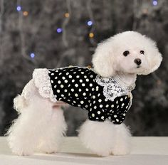 New pet clothes spring and summer clothing apparel VIP than teddy bear suit Bud silk T-shirt dog clothes Pet clothes dog clothes