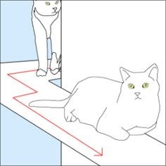 Puurrrfect Interior Design: How to Make a Cat Friendly Home - Movoto