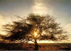 Tree of Life. Bahrain