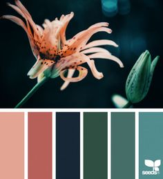 Bedroom colour schemes orange design seeds 63 new Ideas Bedroom Orange, Bedroom Colors, Design Seeds, Colour Pallette, Color Combos, Pantone, Farmhouse Paint Colors, Orange Design, Green Design