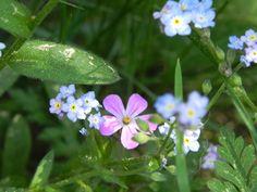 small, yet great! Garden, Plants, Garten, Gardening, Plant, Outdoor, Gardens, Yard, Planting