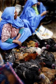 North African Women, selling chickens