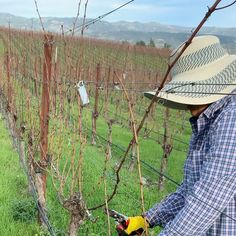 Today in the Cabernet Sauvignon vineyard...With the vines in hibernation we now prune the canes. Caspar Estate 📞707-967-8400 💻www.casparestate.com Place an order 🛒www.cultivarwine.com/shop 📧info@casparestate.com 📍Napa Valley, California Text 707-400-9280 #napavalley #casparestate #drinknapa #cabernetsauvignon #itsfromnapa #wineoclock #organicfarming #organicallygrown #vineyards #caliilove #californialove #cagrown #winecountry #winelover #napavalley #luxgift #mywinemoment #vineyard…