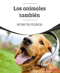 Los animales también aman la música  Para demostrar que los animales también aman la música tanto como los humanos, se han realizado estudios y han surgido nuevas disciplinas. Te lo contamos todo a continuación. #música #amor #animales #curiosidades
